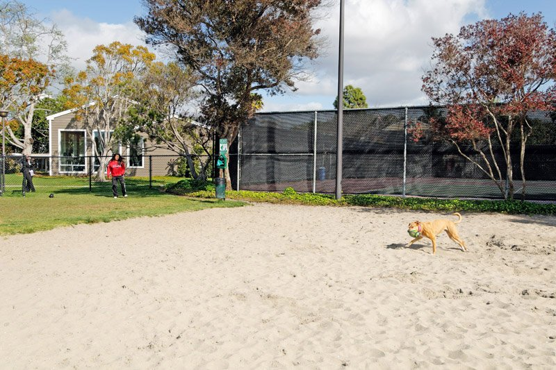 Dog Park: View Photo
